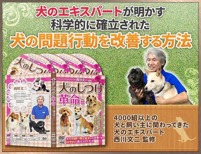 犬のしつけ革命 4000組以上の犬にかかわってきた犬のエキスパート